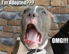 Im adopted3