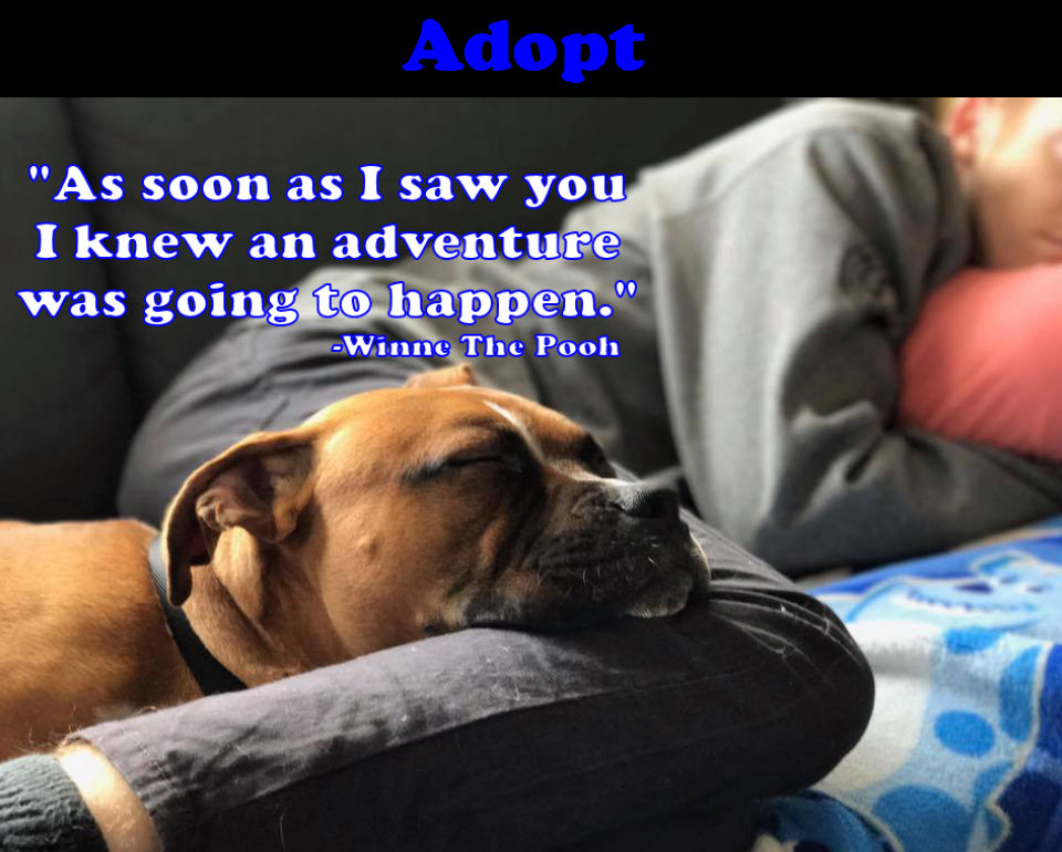 Home At Last Humane Society Find Your New Best Friend